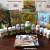 A tanárok a DXN ganoderma kávés MLM üzletet választják! - Kép2