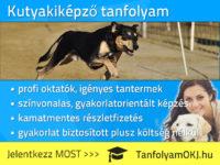Kutyakiképző tanfolyam Budapesten